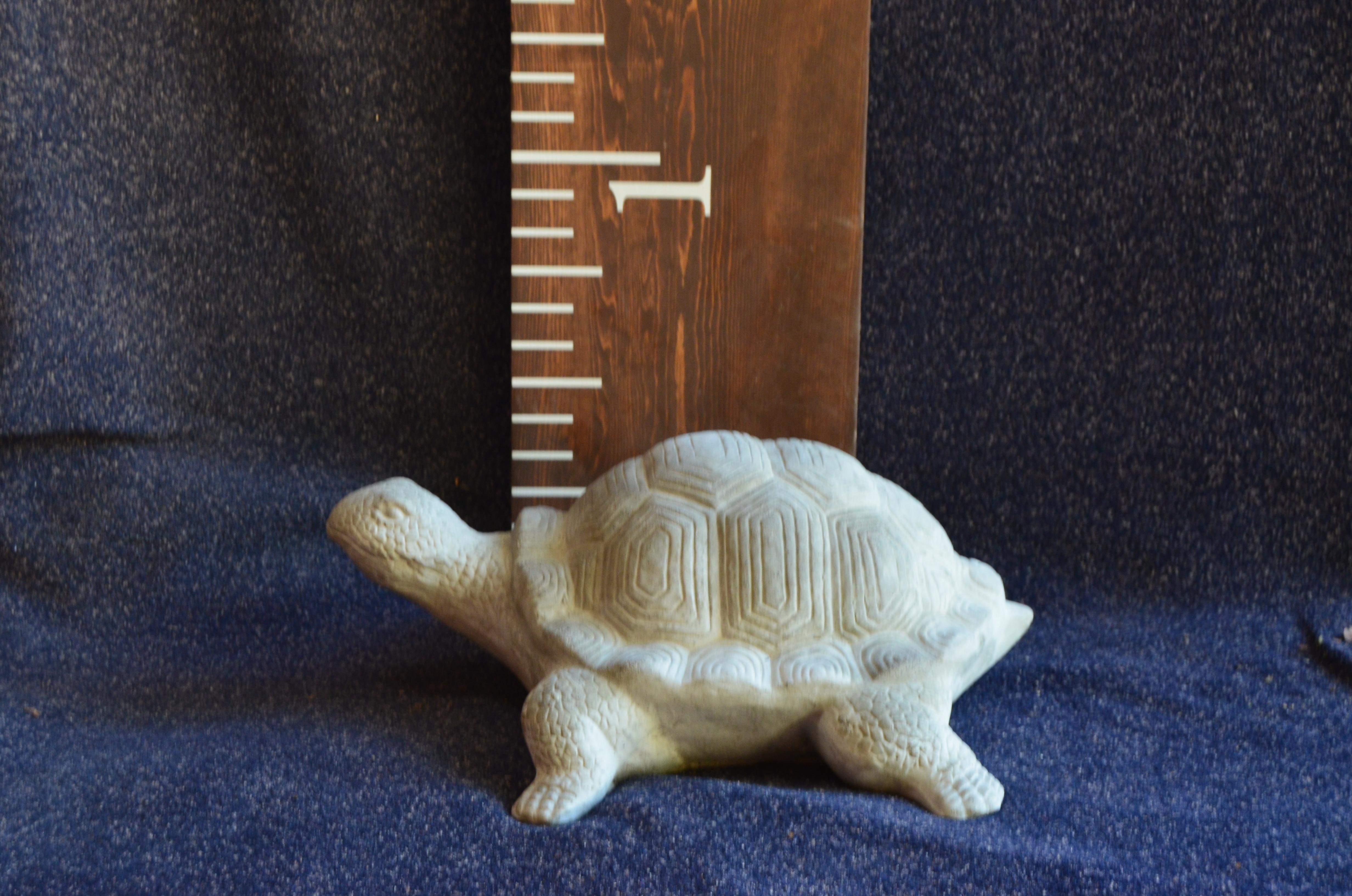 Medium Tortoise